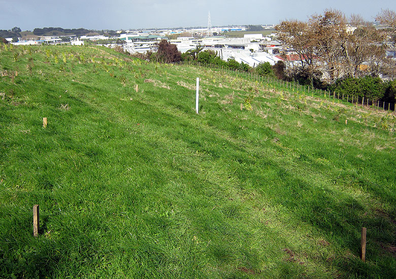 Hamlins Hill MTB Auckland New Zealand